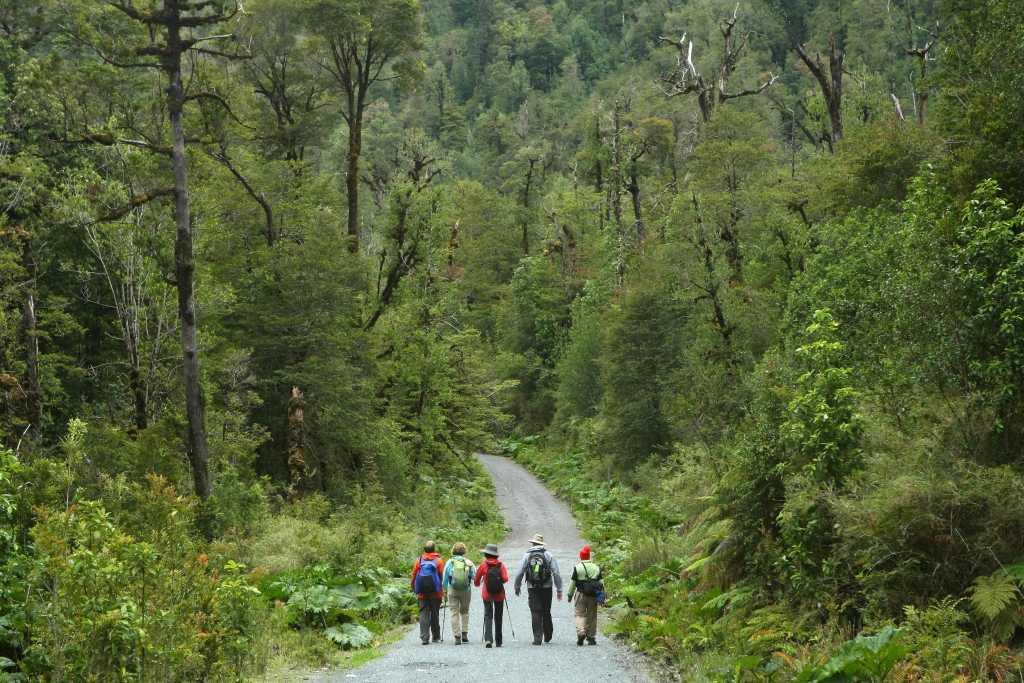 alerce-andino-national-park
